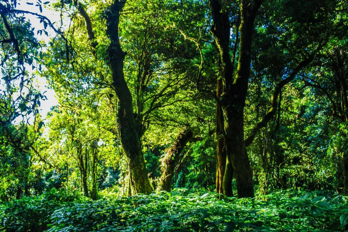 la selva amazonica brasil