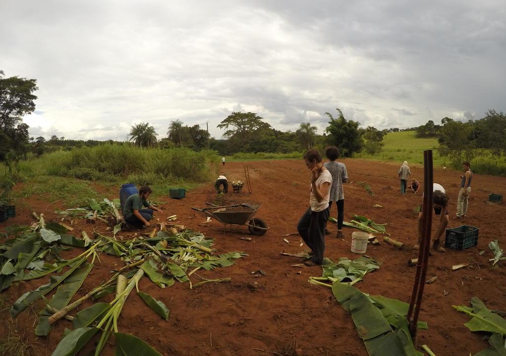 Existem vários tipos de trabalhos em projetos ecológicos