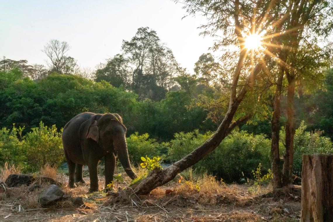 Hacer la ruta del Mekong: Laos, Camboya y Vietnam - Worldpackers - elefantes en libertad en Laos