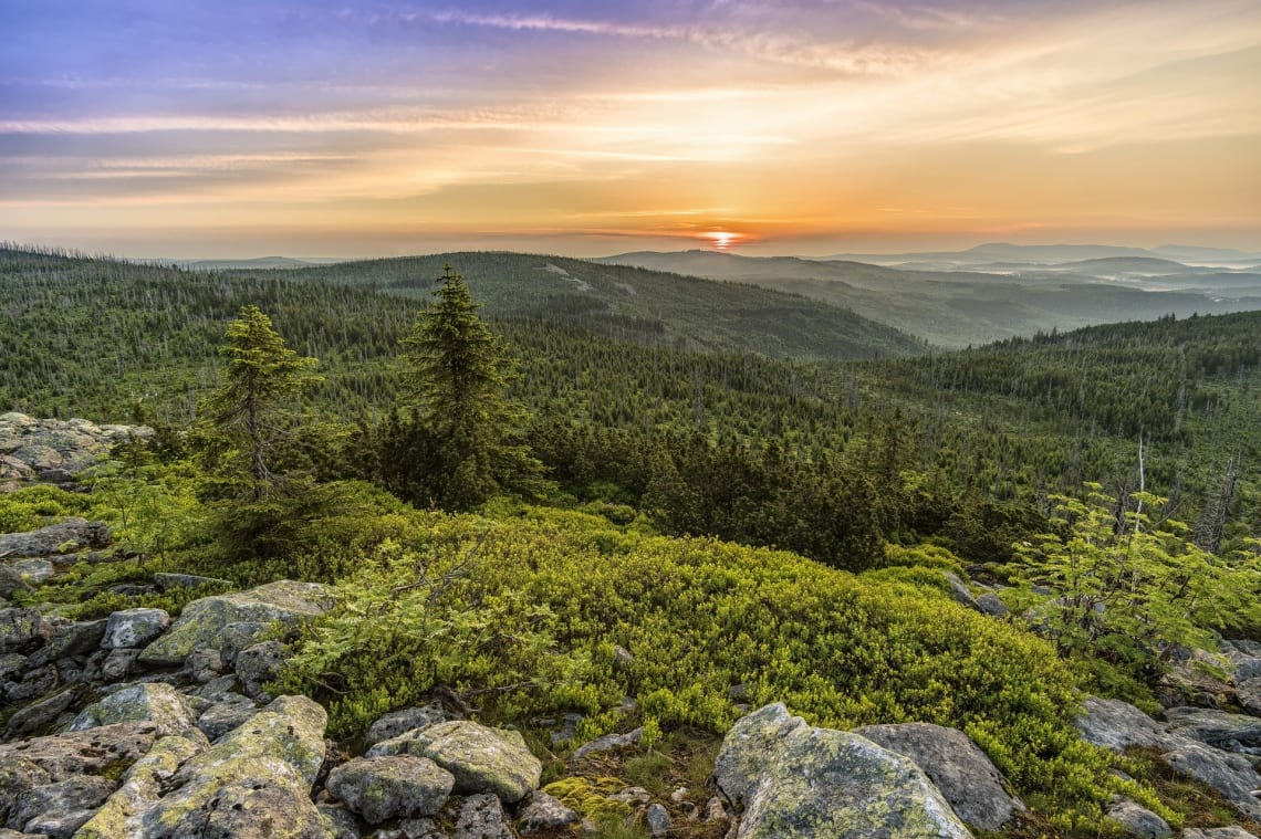 national-parks-europe-forest