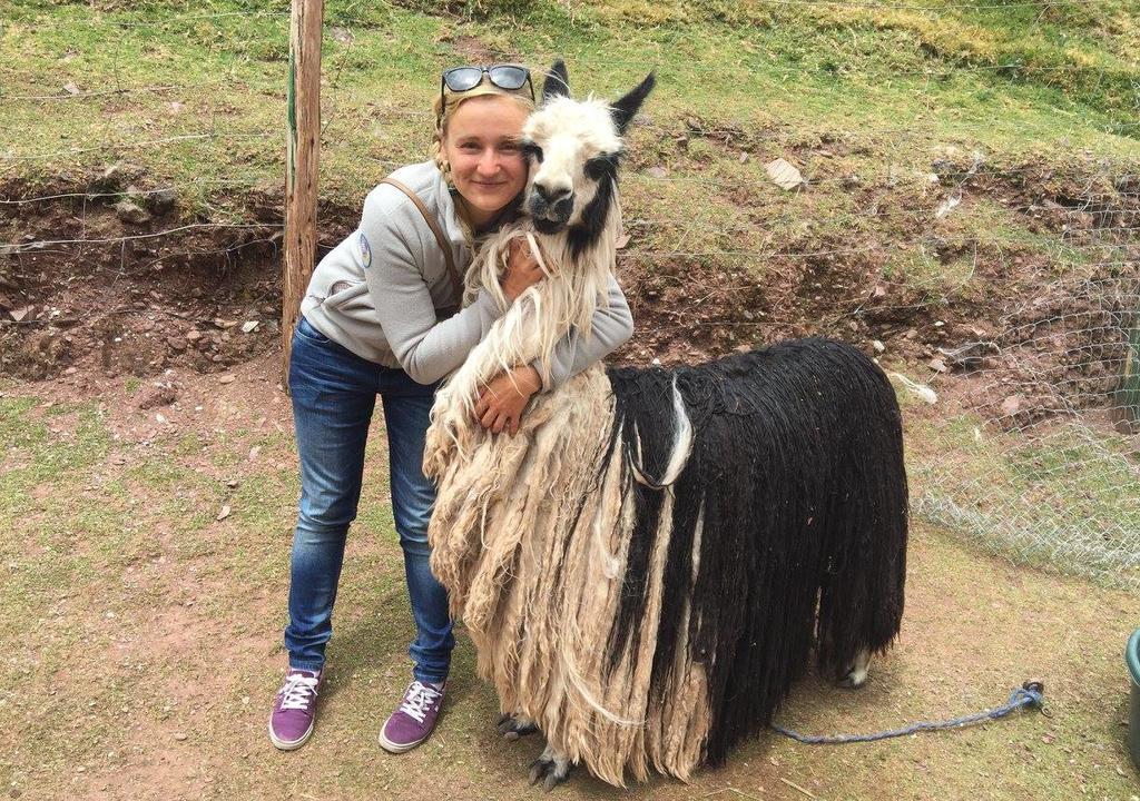 Volunteer to help animals in Peru
