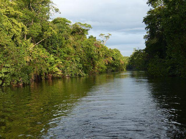 Ruta para recorrer Centroamérica como mochilero - Worldpackers - rio en medio de la selva en Costa rica