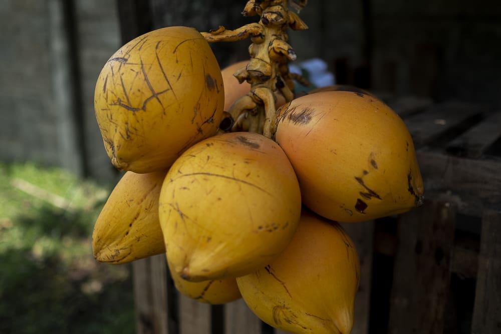 coconut-sri-lanka