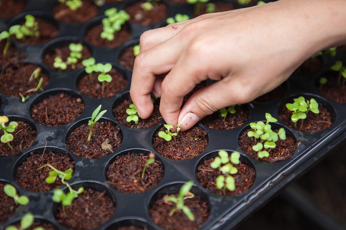 Amazing gap year ideas: work on organic farms