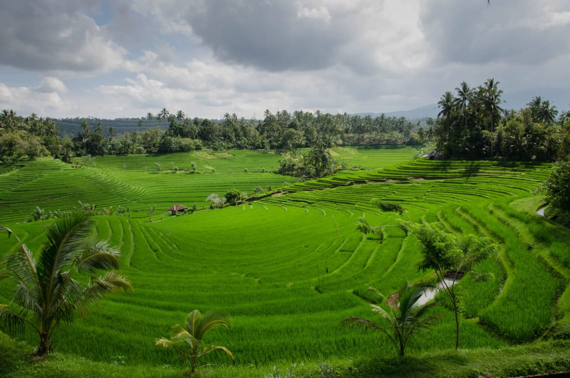 Stunning rice fields. Bali, Indonesia.