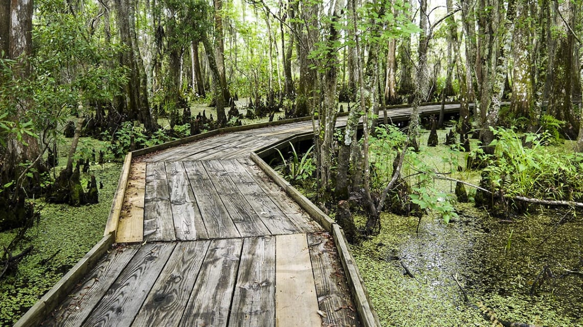 Things to do in New Orleans on a budget: explore Barataria Preserve
