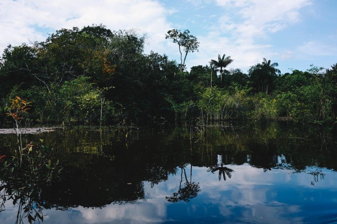 la selva amazonica plantas