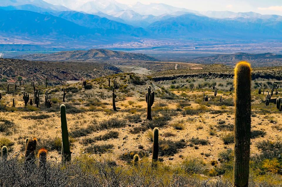 Los mejores 10 destinos de Sudamérica para mochileros - Worldpackers - cactus en el NOA en Argentina