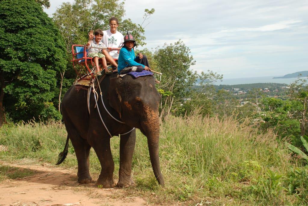 Andar de elefante é um caso comum de maus tratos contra animais