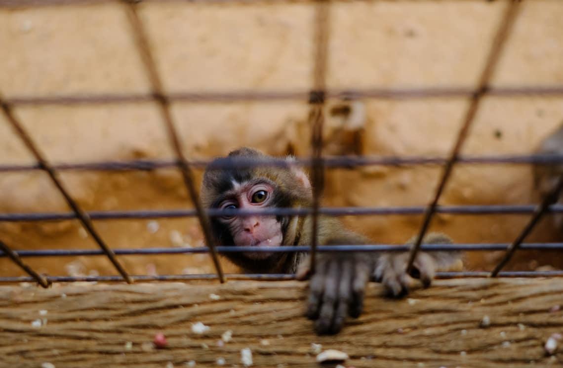 Qualquer tipo de apresentação com animais pode ser considerada maus tratos contra animais