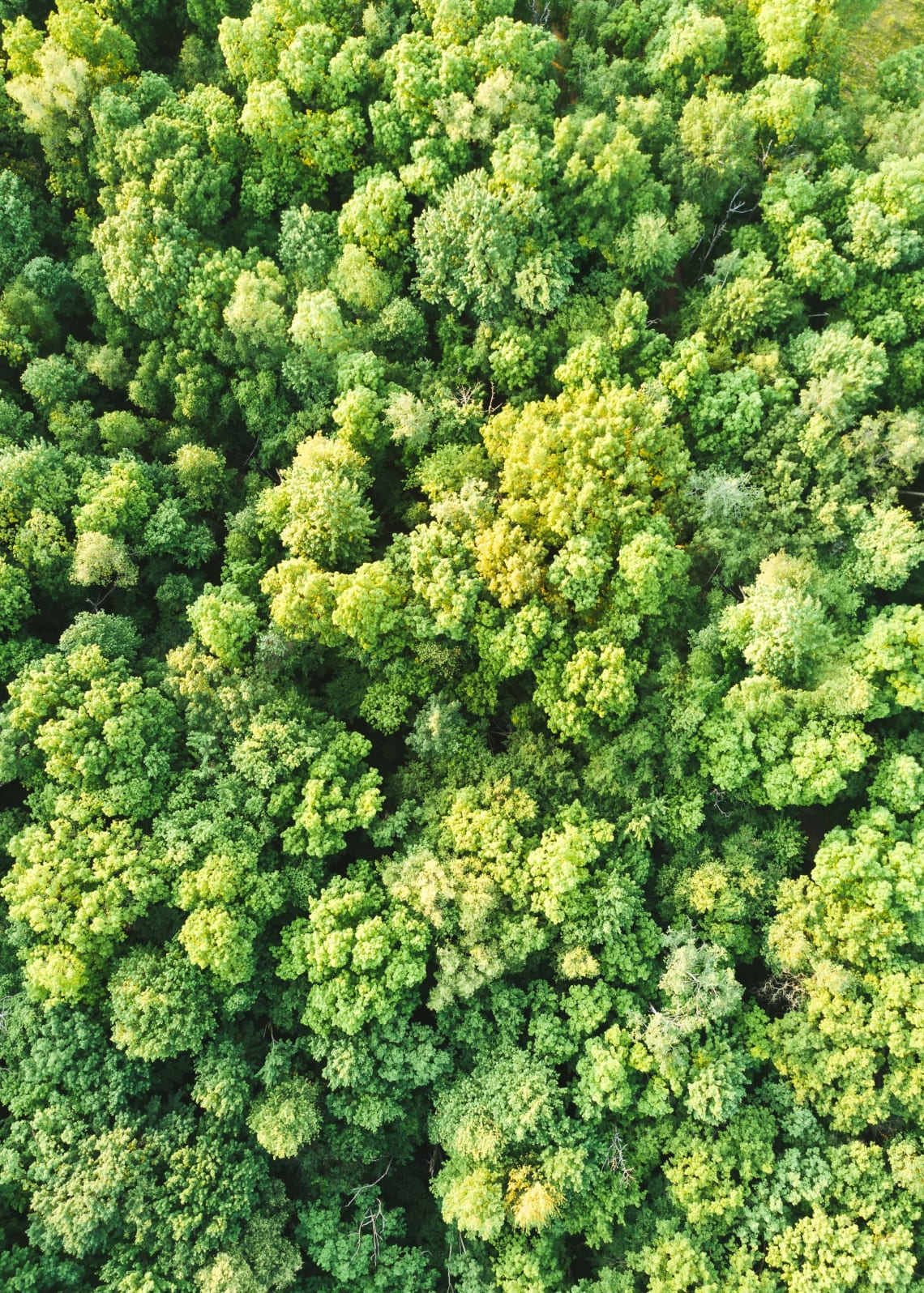 Aerial view of the Amazon Rainforest before the fires