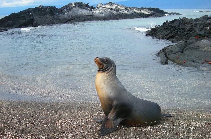 Los países más baratos de Sudamérica para viajar - Worldpackers - lobo marino en Galápagos ecuador