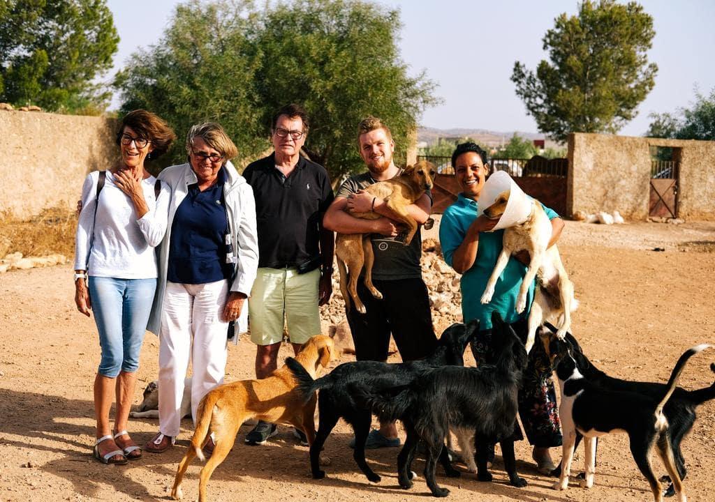 Volunteering to help animals in Morocco