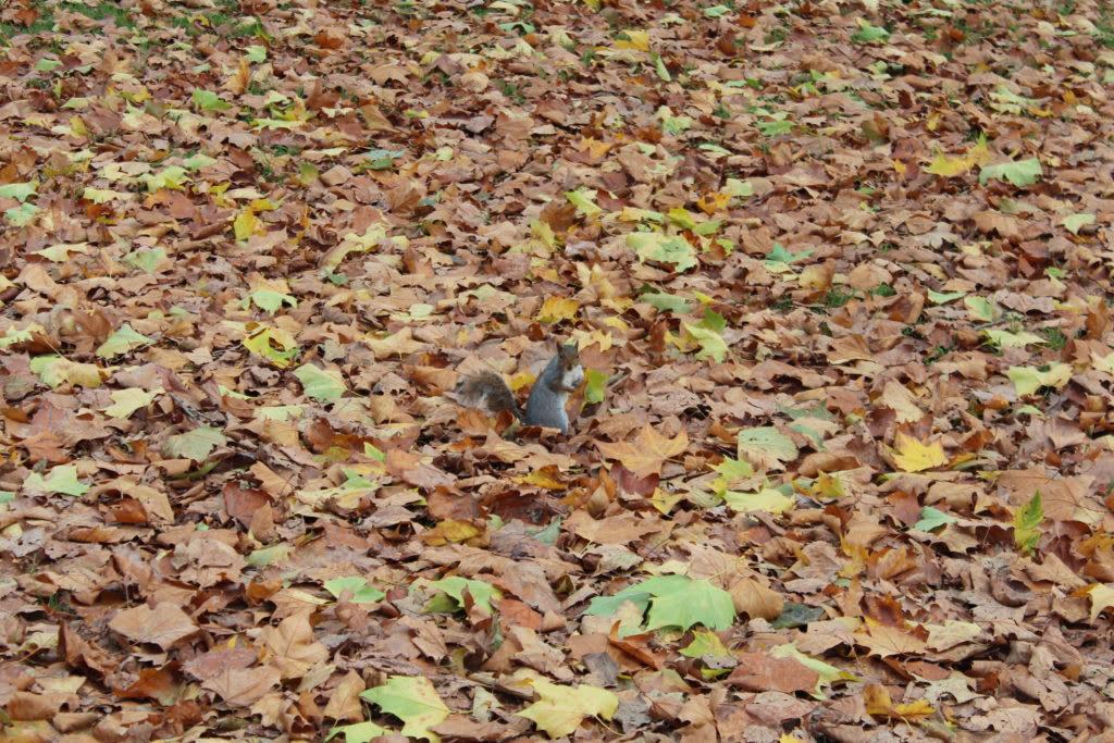 12 lugares que no debes perderte en Londres - Worldpackers - parques en otoño en londres