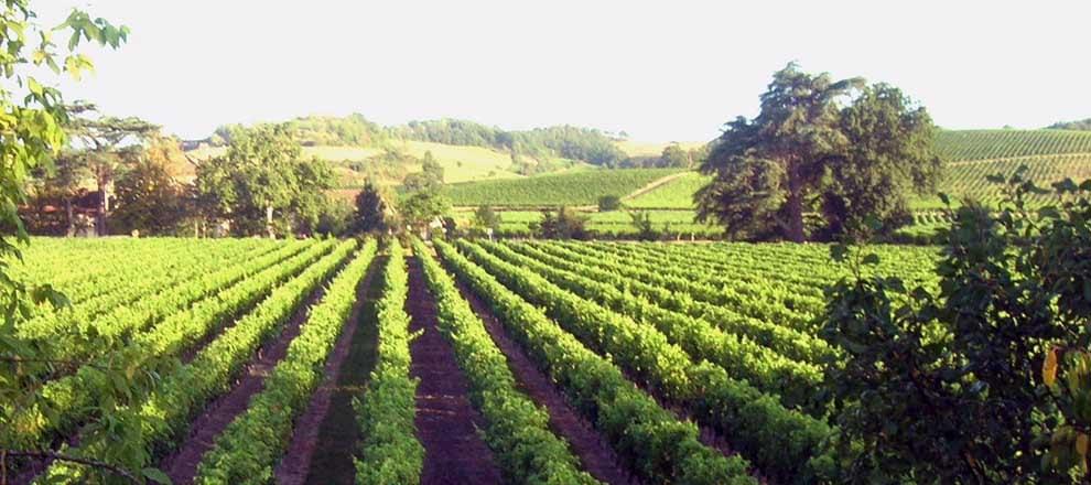 Las mejores cosas que hacer en Tarija y alrededores - Worldpackers - viñedos en ruta del vino por Bolivia
