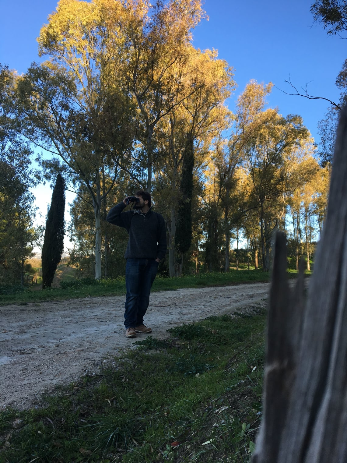 Birdwatching in the Sicilian countryside