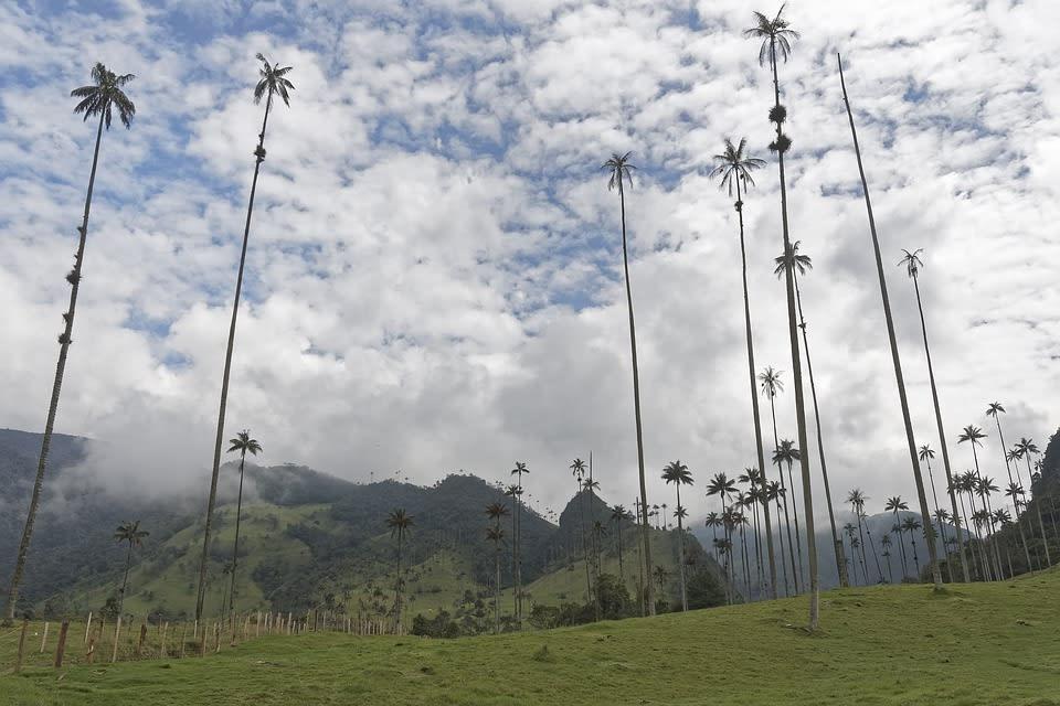 Ruta para viajar por Colombia - Valle del Cocora - Worldpackers