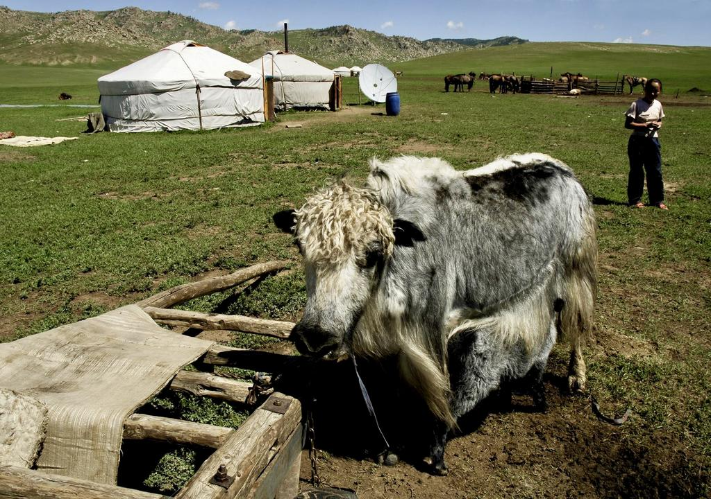 Animal care in Mongolia