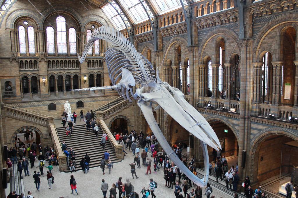 12 lugares que no debes perderte en Londres - Worldpackers - museo de historia natural en londres