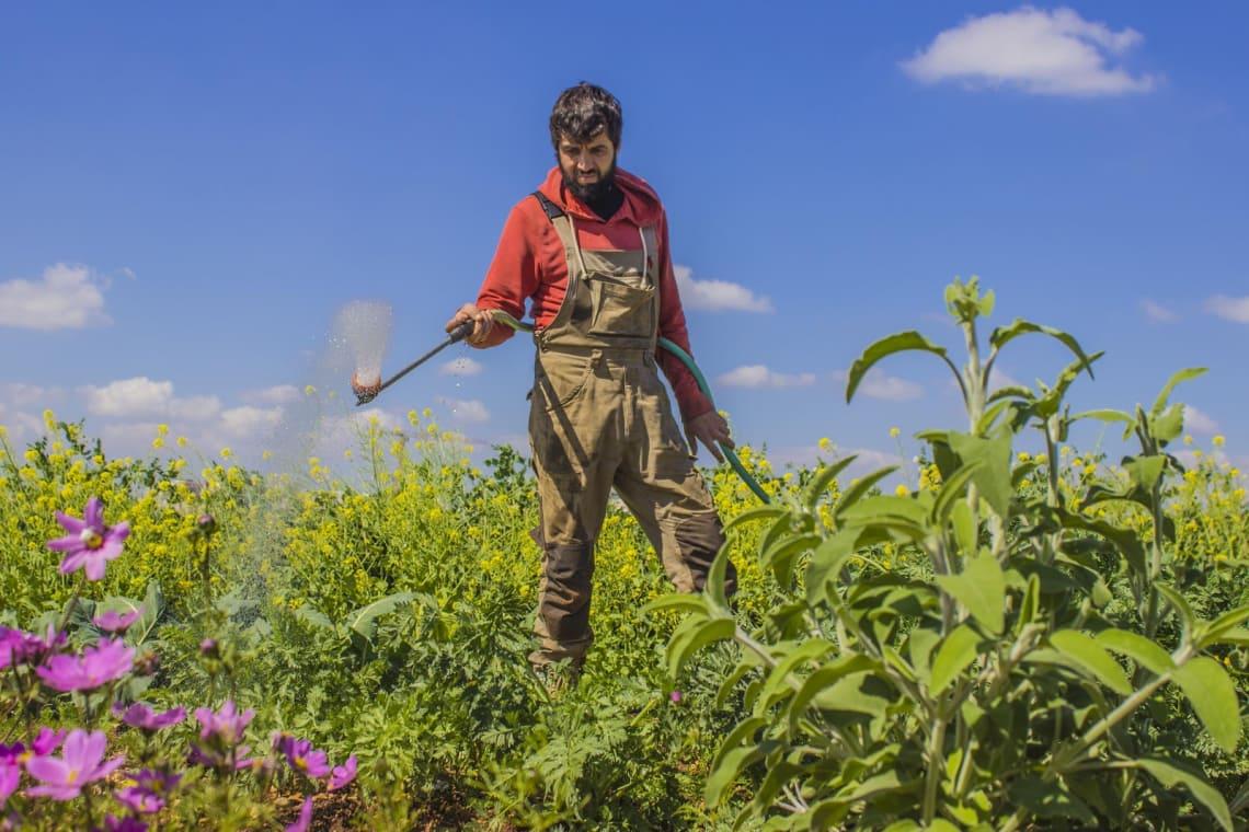 Bubu, um dos irmãos donos do Hostel in Ramallah, trabalhando na fazenda