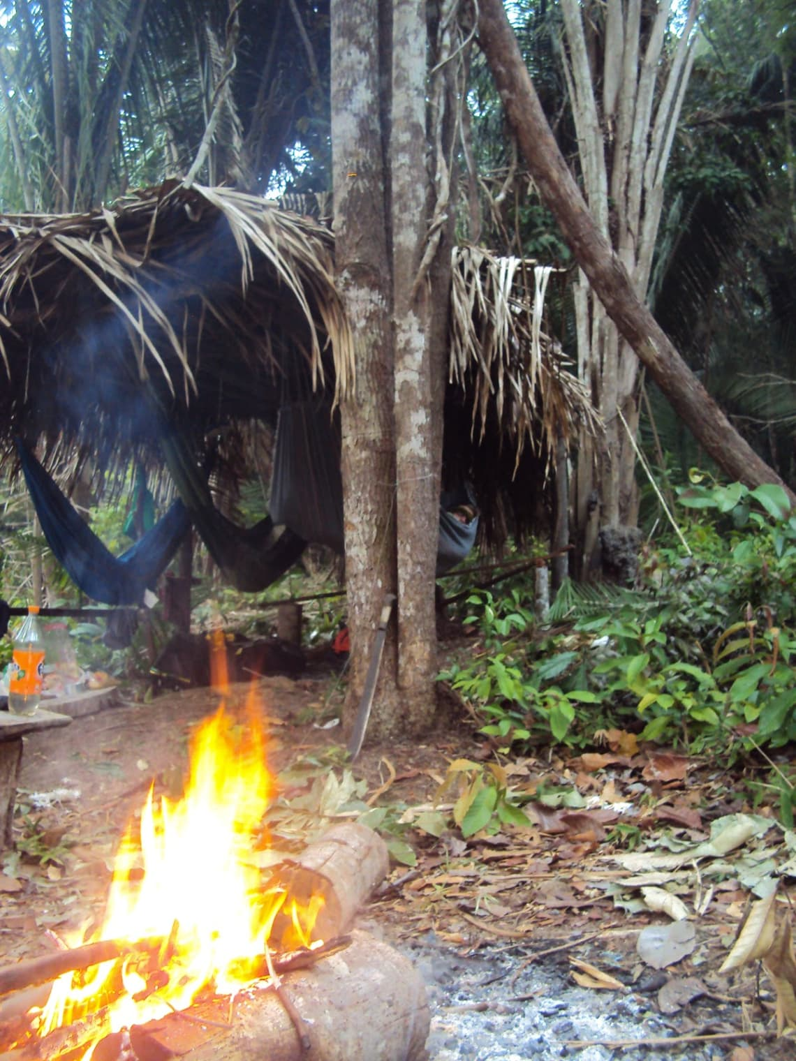 Floresta Amazônica, município de Itacoatiara, Amazonas