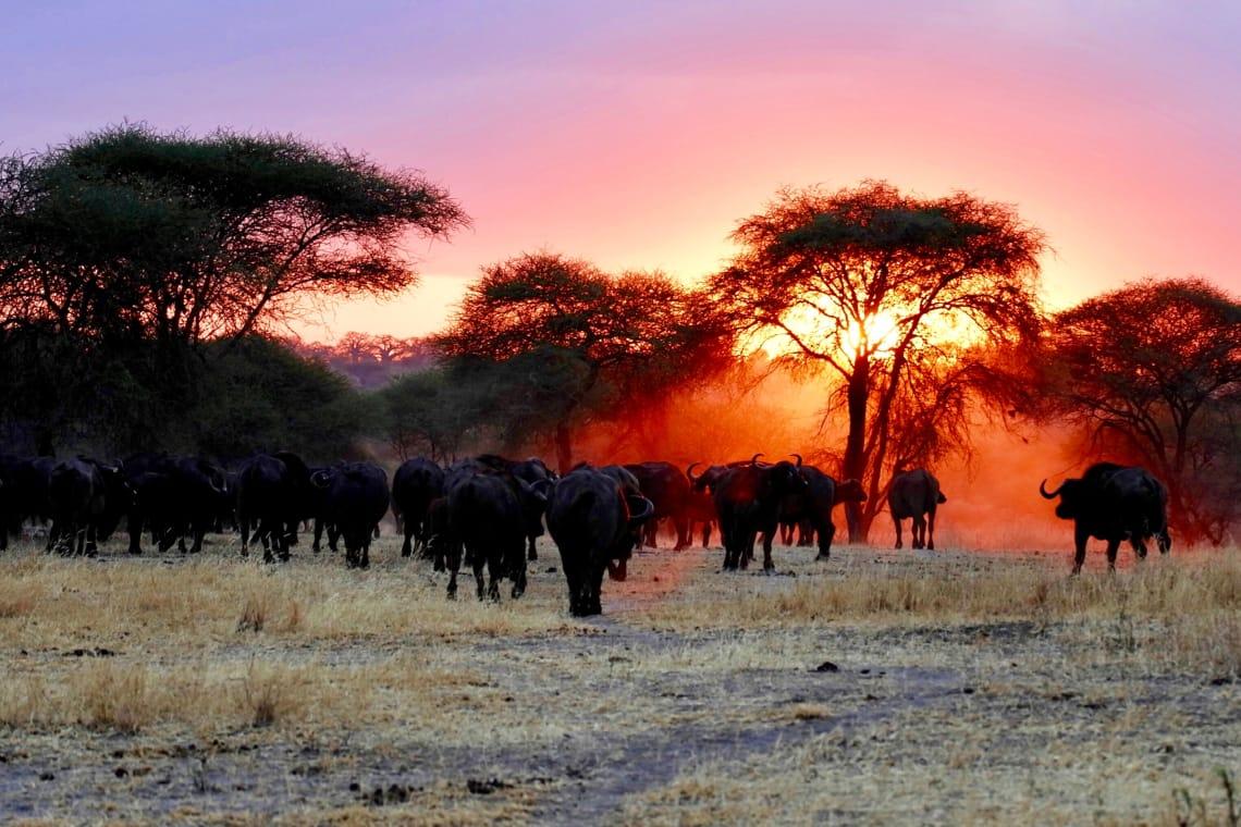 Savana da Tanzânia atrai turistas o ano todo