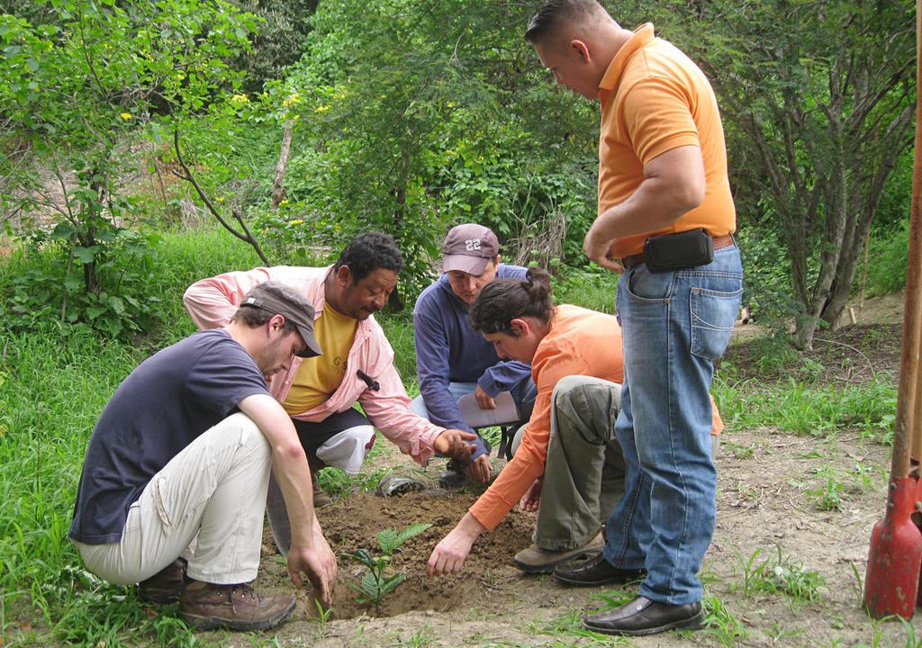 Tipos de trabalho voluntário: colaborar com iniciativas ambientais