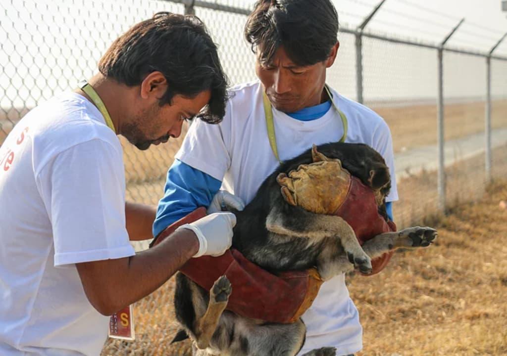Tipos de trabalho voluntário: Cuidar de animais