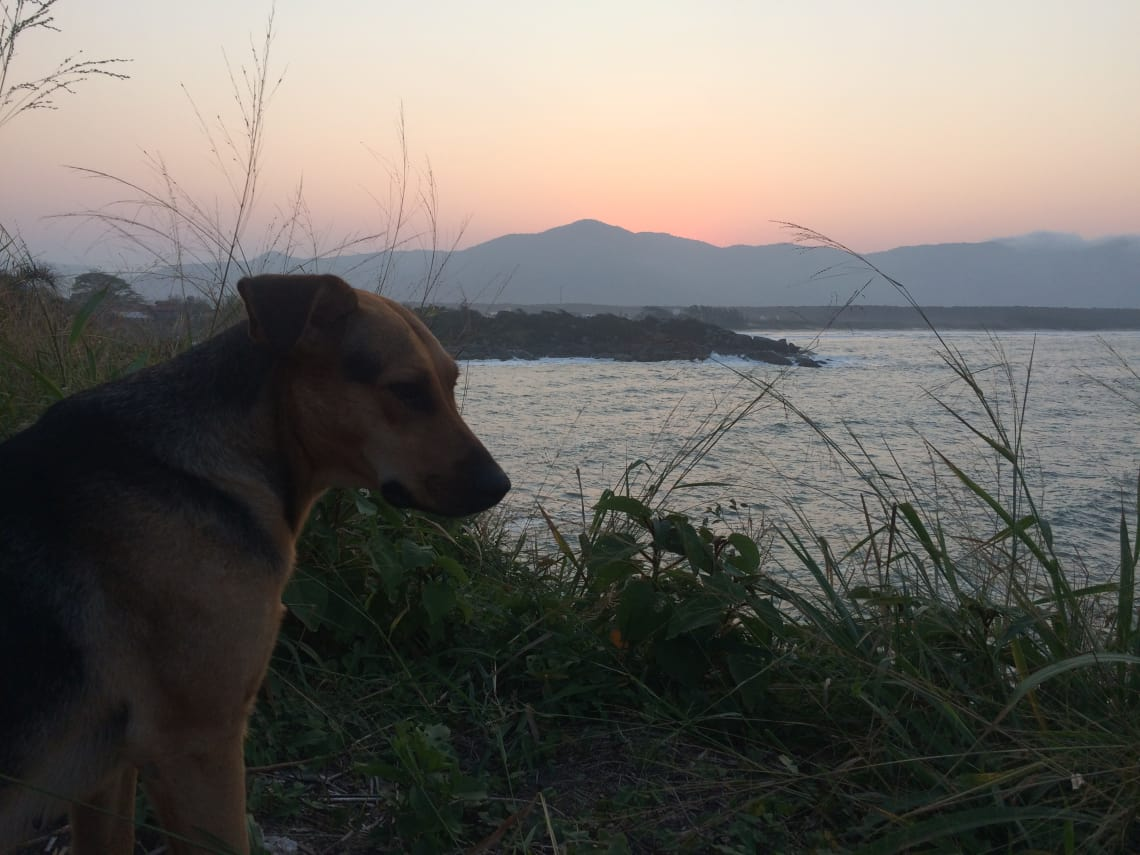 cachorro vendo o mar no por do sol