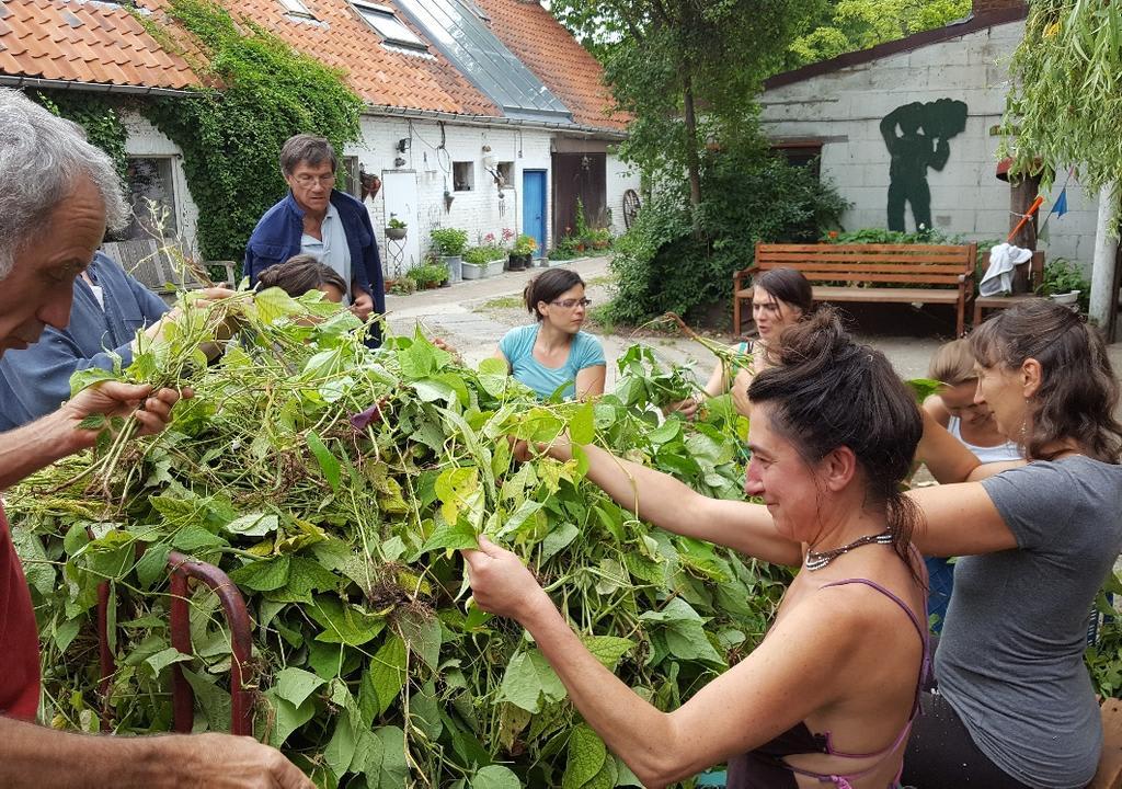 voluntarios ayudando en granja organica en Belgica