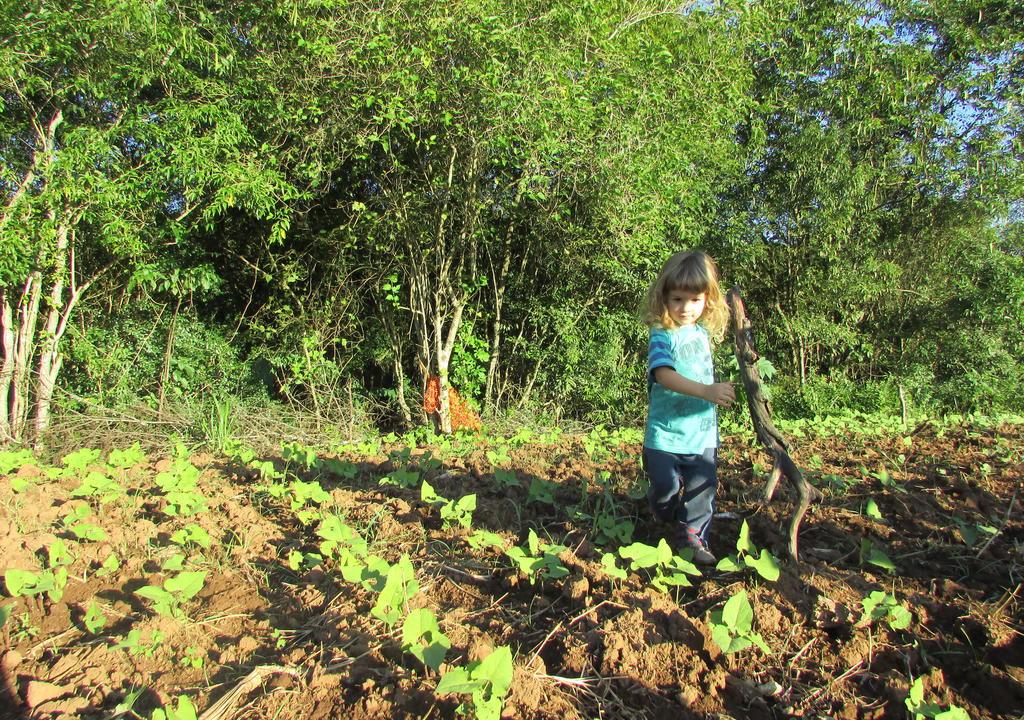 organic family farm in Brazil