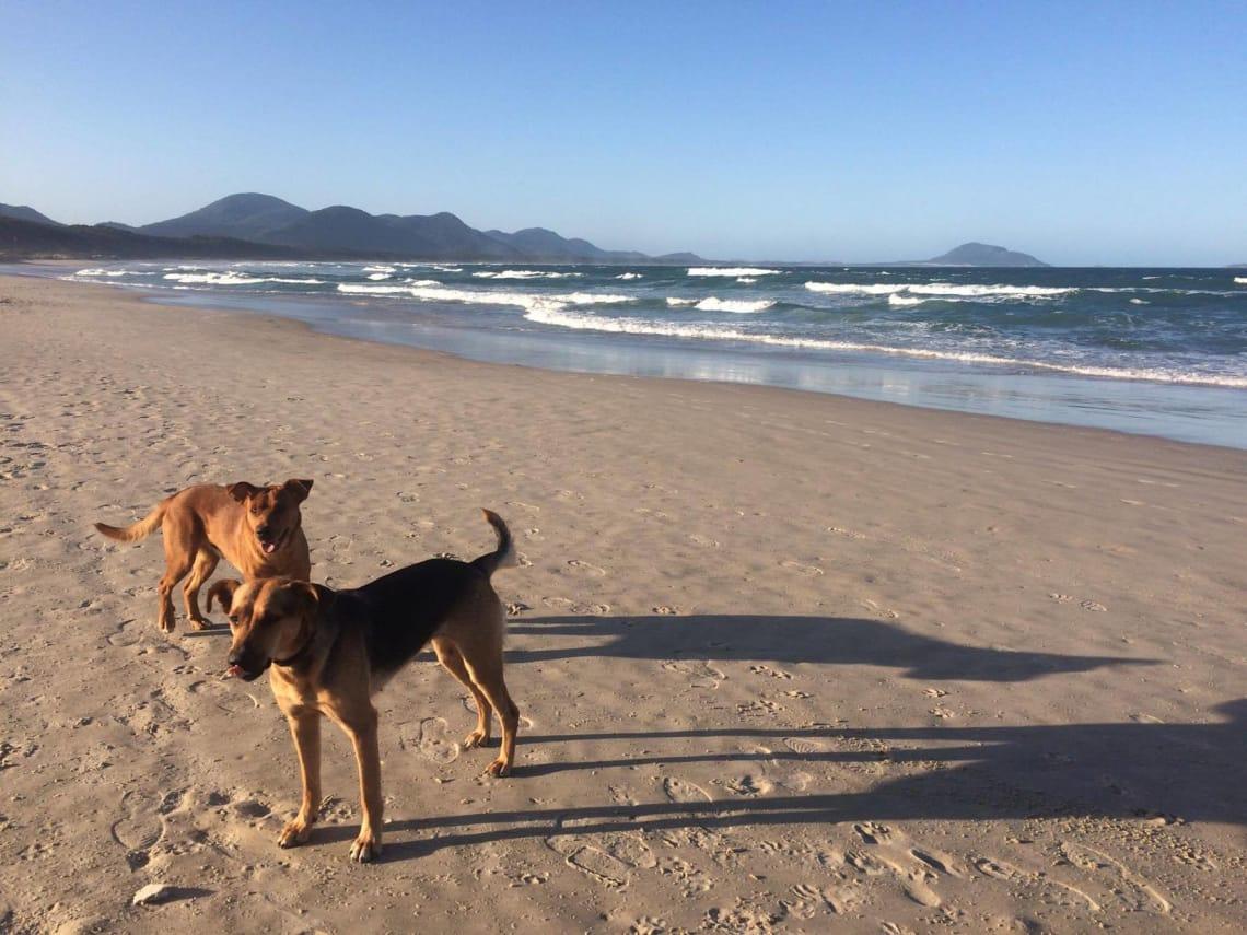 Praia do meu anfitrião Worldpackers em Floripa