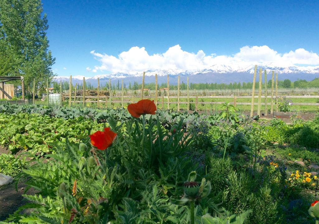 Mendoza é a cidade argentina conhecida pelos vinhos