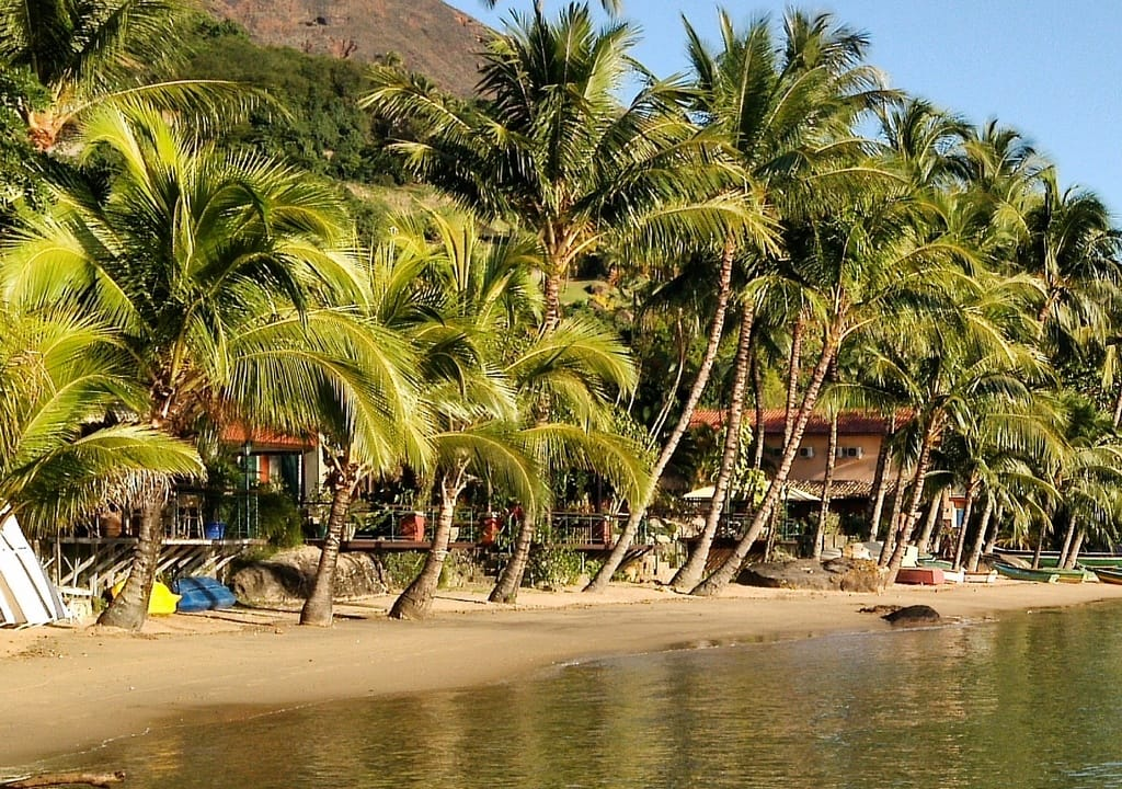 ¿Cuál es el voluntariado perfecto de acuerdo a tu signo? - worldpackers palmeras y playa
