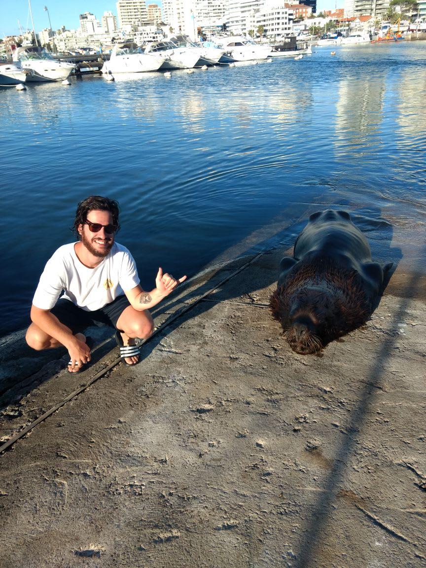 Voluntário tira foto com lobo marinho