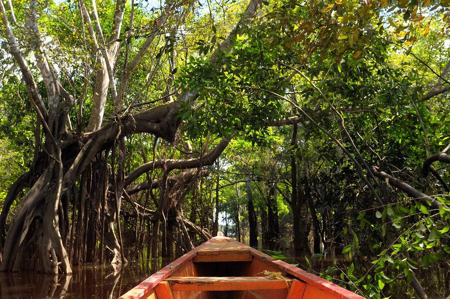 Igarapé, Amazônia, Brasil.