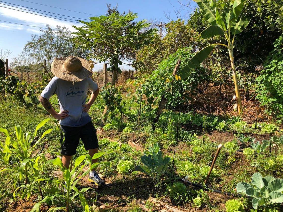 Experiencia de permacultura en Indaiatuba promovida por Worldpackers