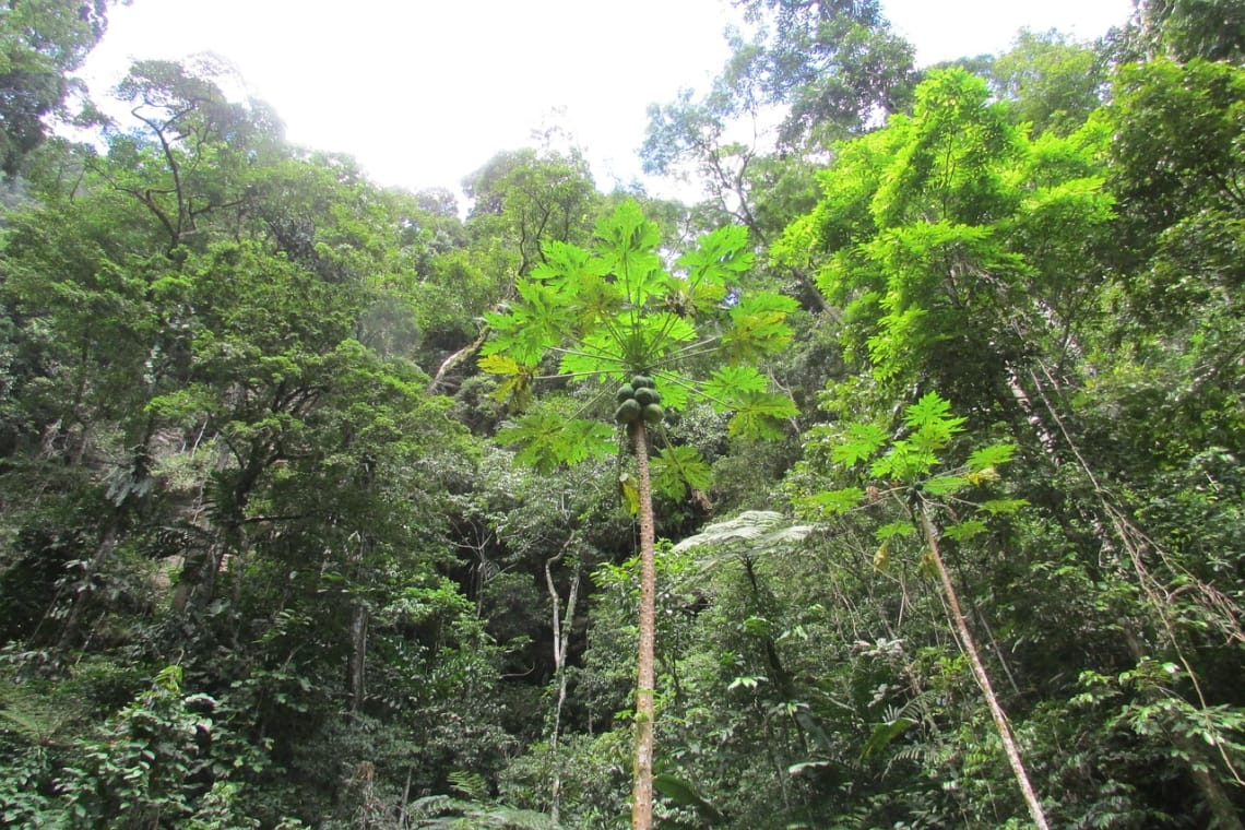 Não perca a chance de conhecer a Amazônia Peruana