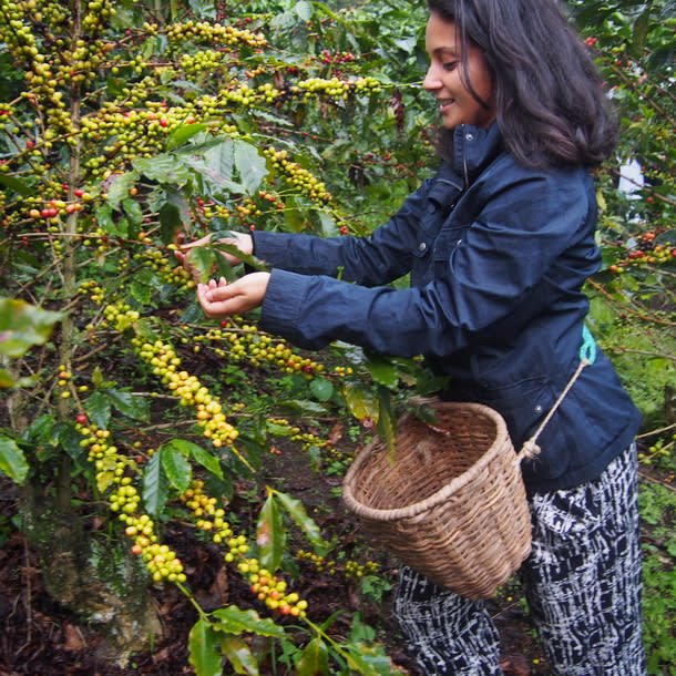 viajar y trabajar por Sudamérica - Worldpackers - lina maestre en zona de cafe en Colombia