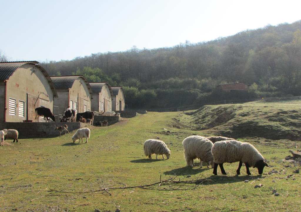 Hostel na Europa: Agripunk, em Bucine.