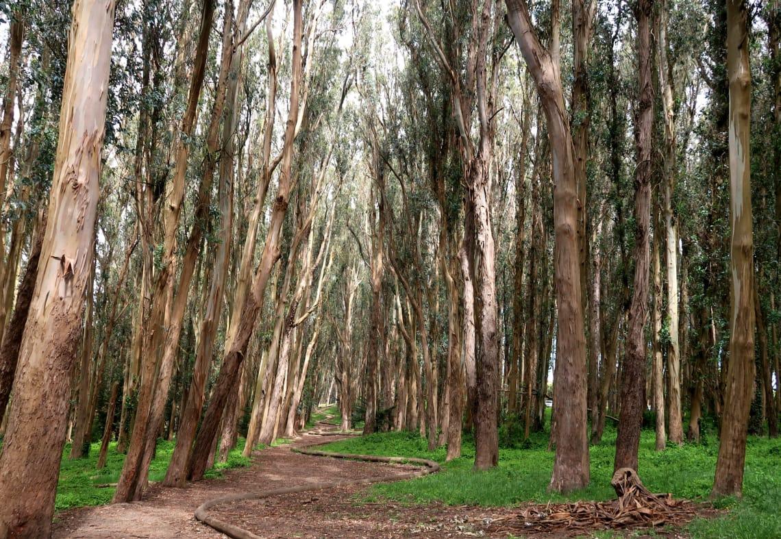 Dicas de São Francisco: Woodline