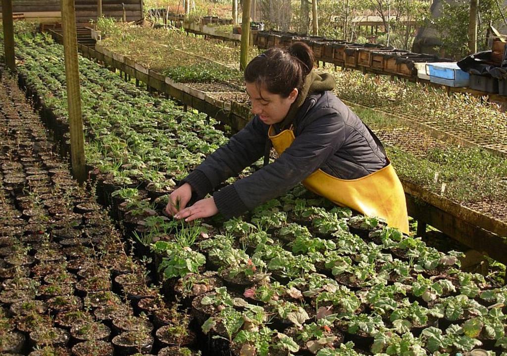 10 increíbles voluntariados en Sudamérica - Worldpackers - mujer sembrando en granja orgánica en Valdivia