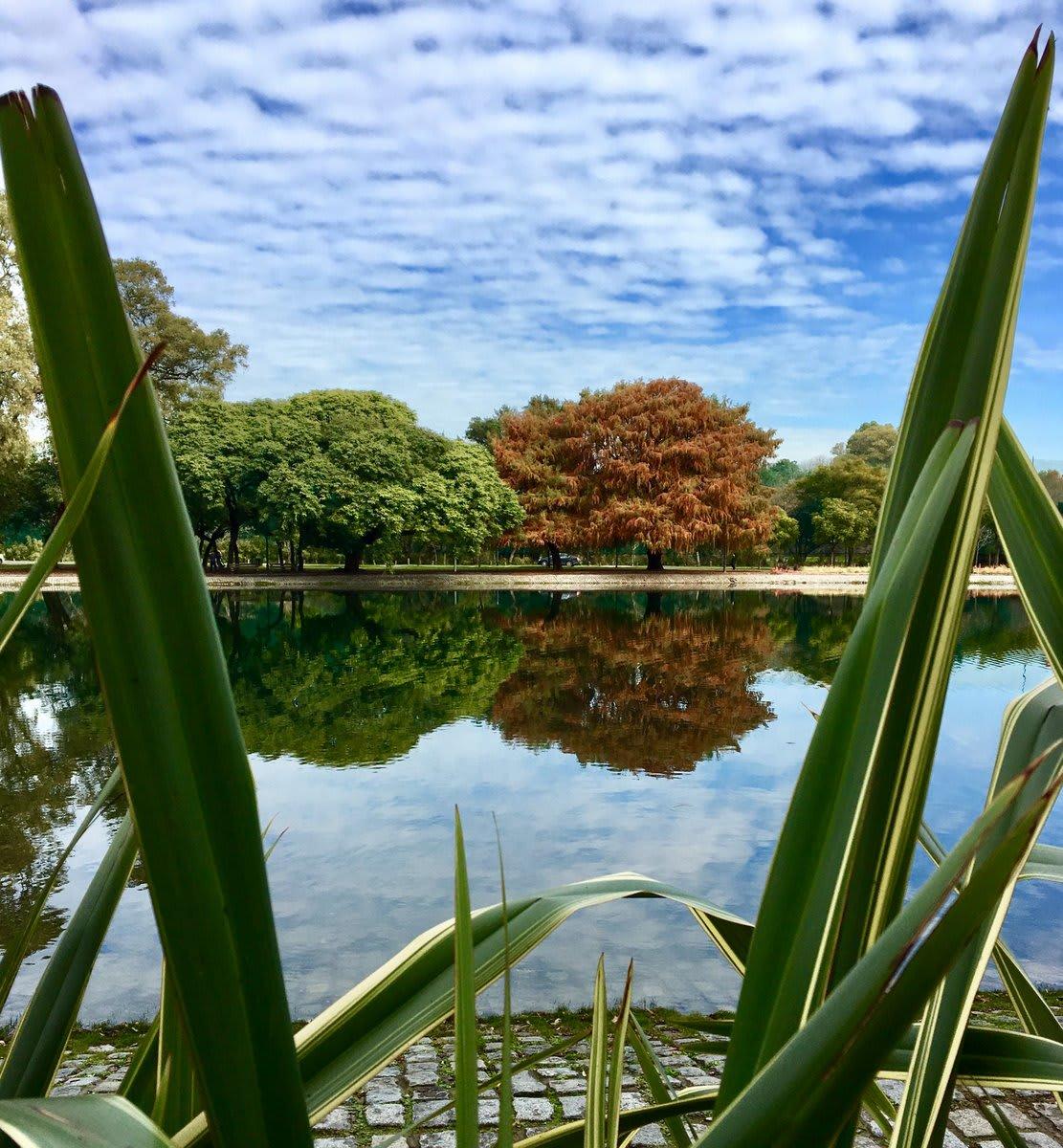 Mega guía para viajar a Buenos Aires: todo lo que debes que saber - Worldpackers - lagos de palermo de día