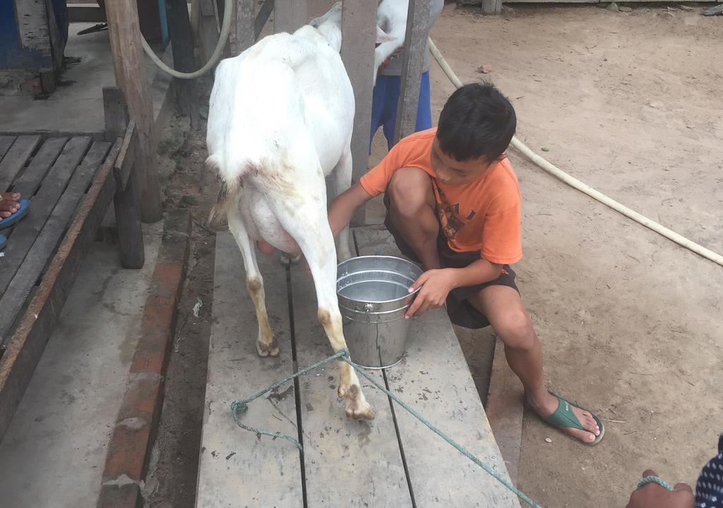 Volunteer to help animals in Cambodia