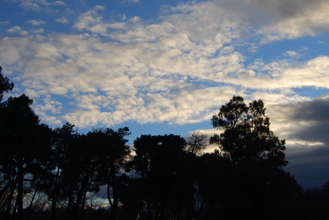 Rutas para recorrer España como mochilero - Worldpackers - árboles en atardecer en España