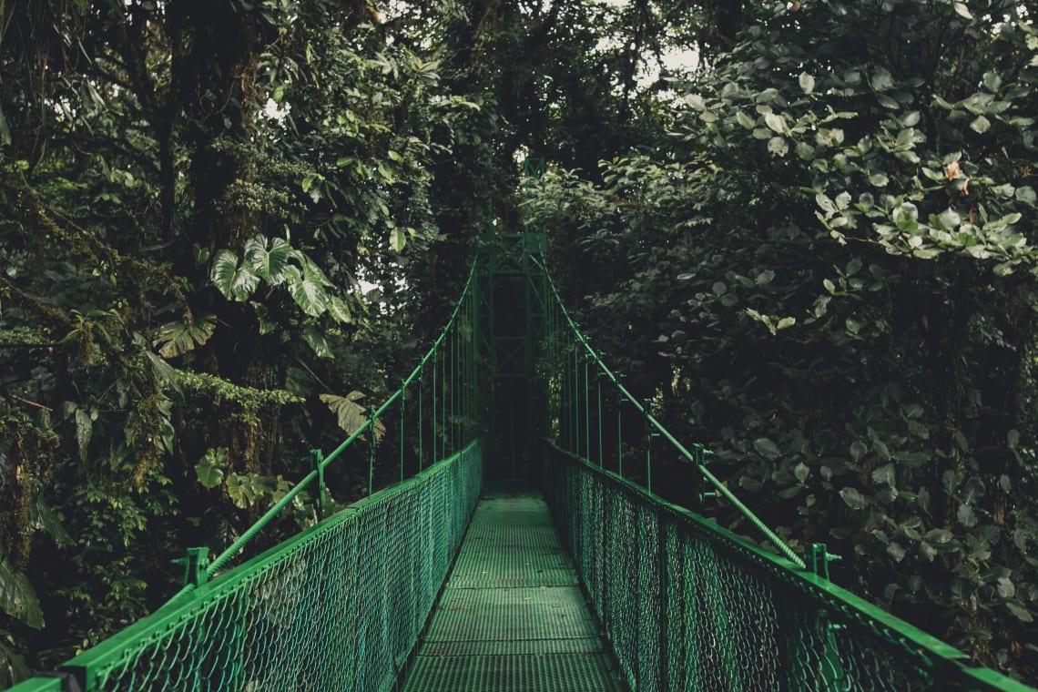 intercambio costa rica floresta