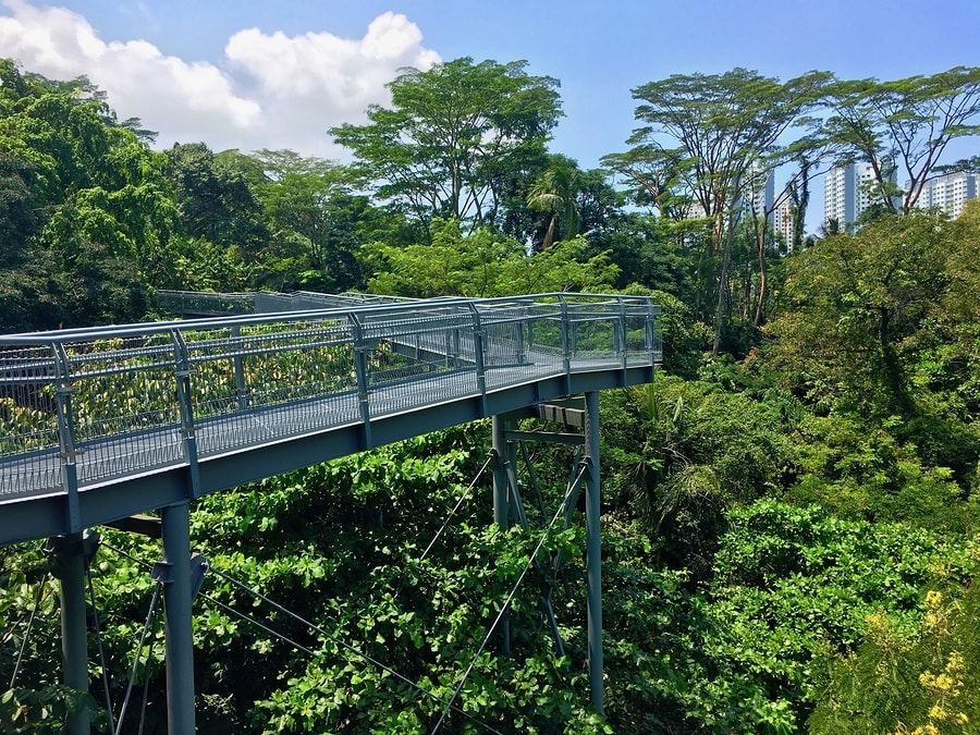 Passear pelas árvores também é uma opção para sua viagem para Singapura