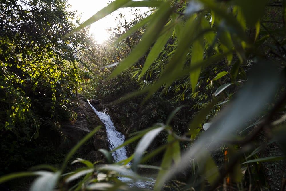 17 días haciendo un voluntariado en India, en la capital mundial del yoga: Rishikesh - Worldpackers - cascada con selva en Rishikesh
