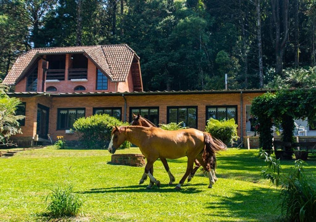 Schmitt Haus, Brazil