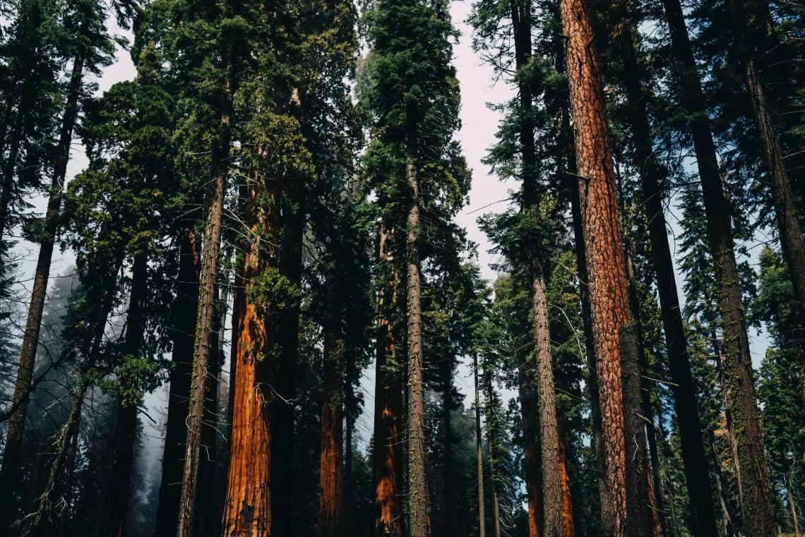 Sequoia National Park, USA
